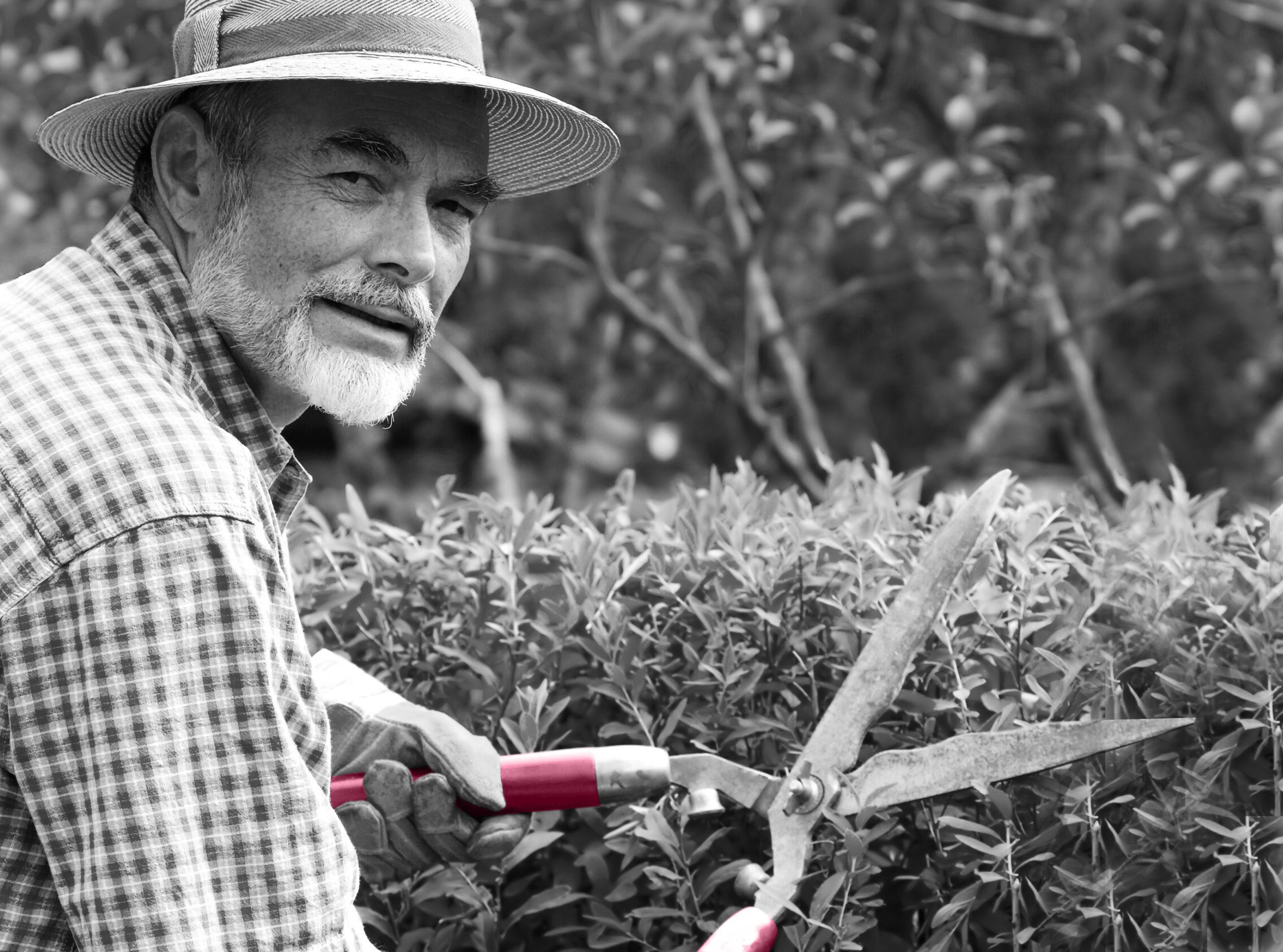 Håll trädgården fin med hjälp av att hyra seniorer
